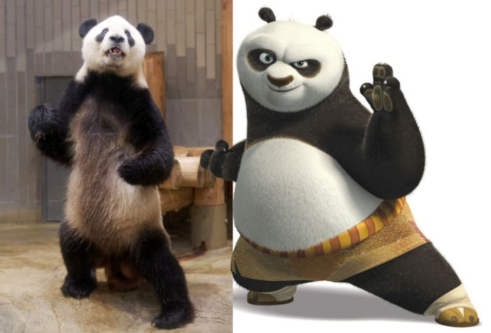 The Real Kung Fu Panda Lives In A Zoo In Tokyo (3 pics)