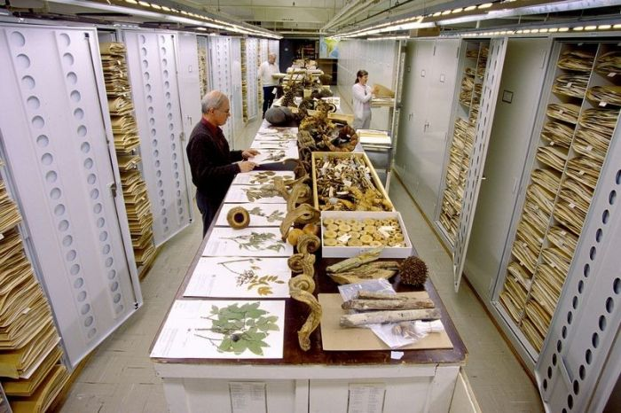An Inside Look At The Specimen Collections At The Smithsonian's Museum Of Natural History (12 pics)