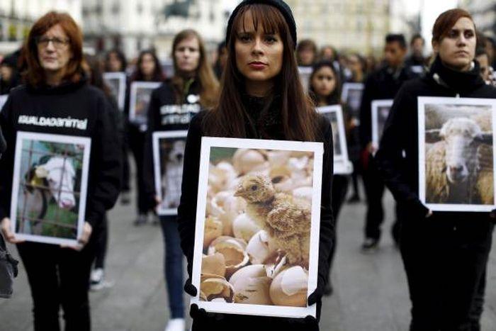 Animals Rights Activists Protest Bullfighting In Madrid (11 pics)