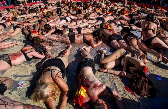 Animals Rights Activists Protest Bullfighting In Madrid (11 pics)