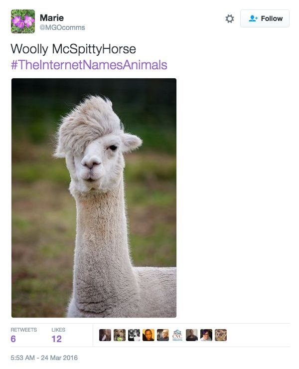 Animals Get New Names Courtesy Of The Internet (22 pics)
