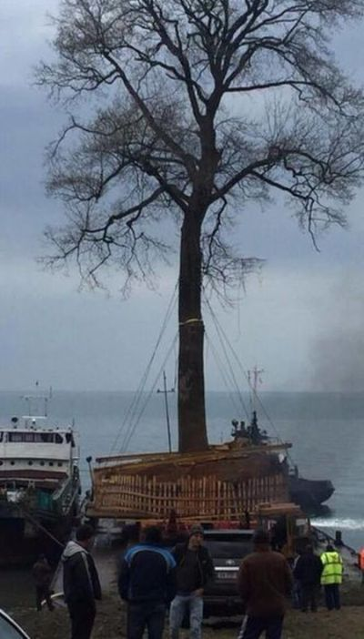 It's Not Easy To Transfer A Tree (3 pics)