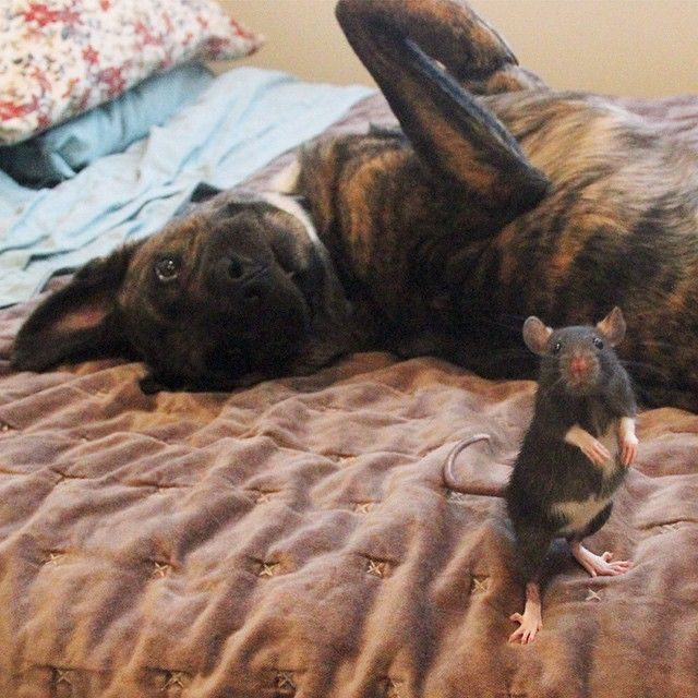 Best Friends Come In All Different Shapes And Sizes (9 pics)