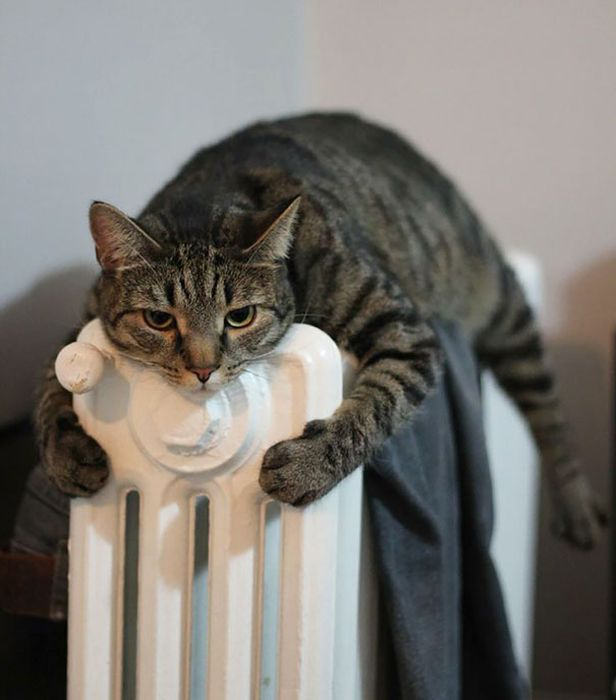 Cats Will Do Anything To Feel A Little Warmth (46 pics)