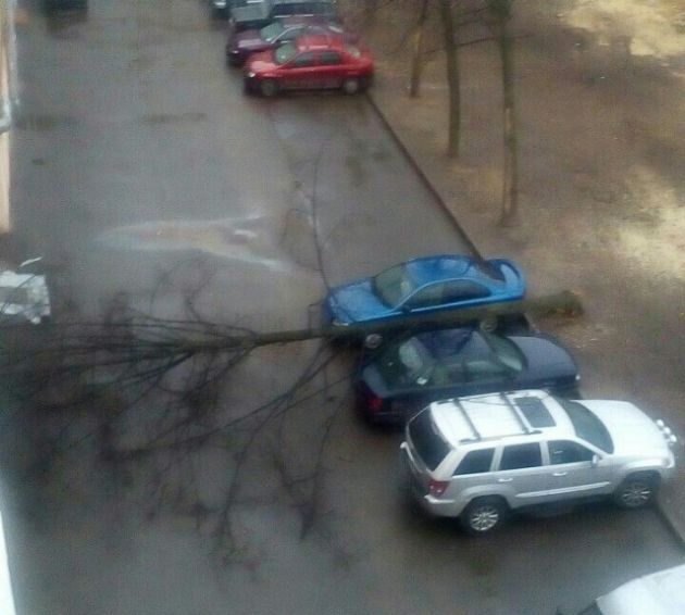 Looks Like These Cars Were Parked In A Lucky Spot (2 pics)