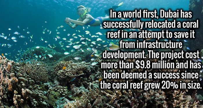 Serve Your Brain Some Knowledge With These Fresh Facts (18 pics)