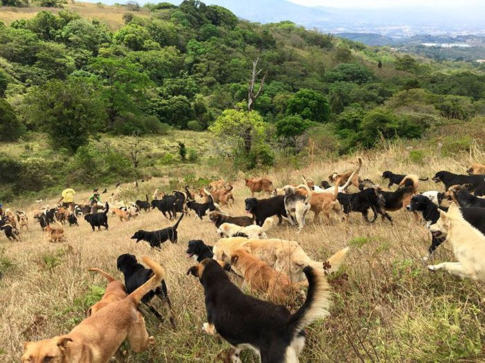 Costa Rica Has A Sanctuary For Stray Dogs (10 pics)