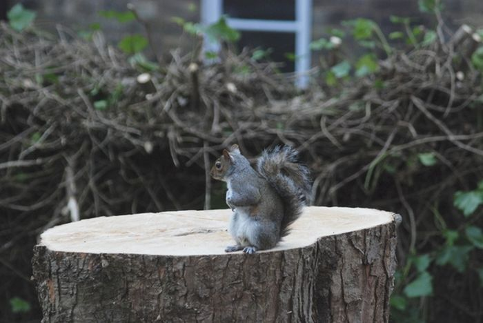 Sad Moment For A Squirrel (2 pics)