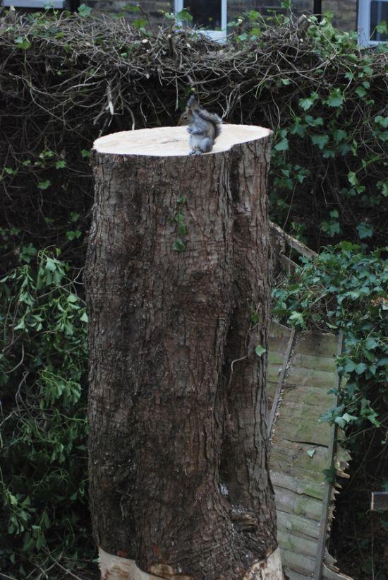 Sad Moment For A Squirrel (2 pics)