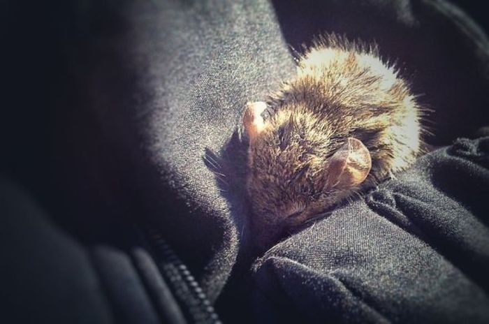 Tiny Mouse Gets Rescued At Lake Ontario (17 pics)