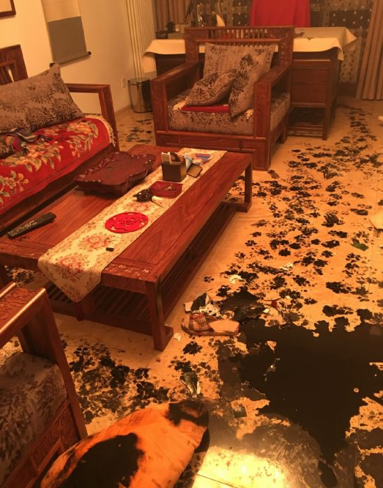 Dog Completely Trashes Home After Being Left Alone For 3 Hours (8 pics)
