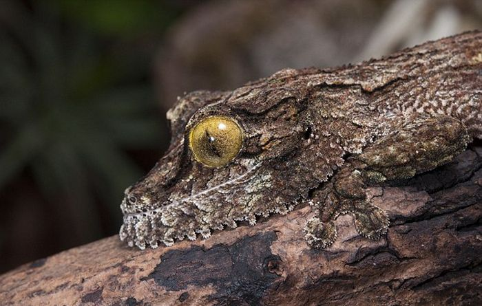 Can You Find The Gecko Hiding In These Pictures? (4 pics)