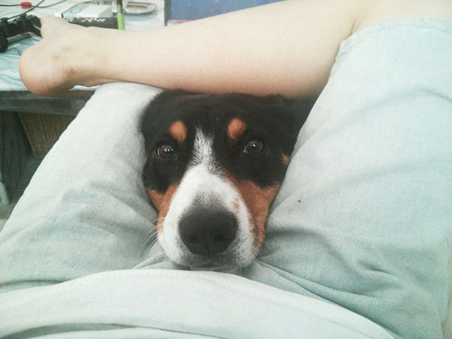 Dogs Could Really Care Less About Your Personal Space (16 pics)