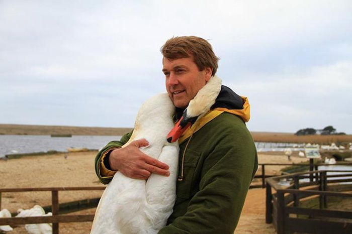 Even Swans Like To Hug When The Time Is Right (5 pics)