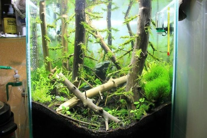 This Awesome Aquarium Looks Like An Underwater Forest (8 pics)