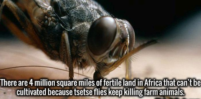 Magnificent Facts That Will Make You A Smarter Person (20 pics)