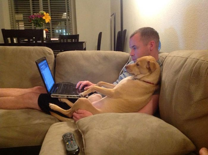 A Touching Tribute To Dogs, The Best Friend A Human Can Have (17 pics)