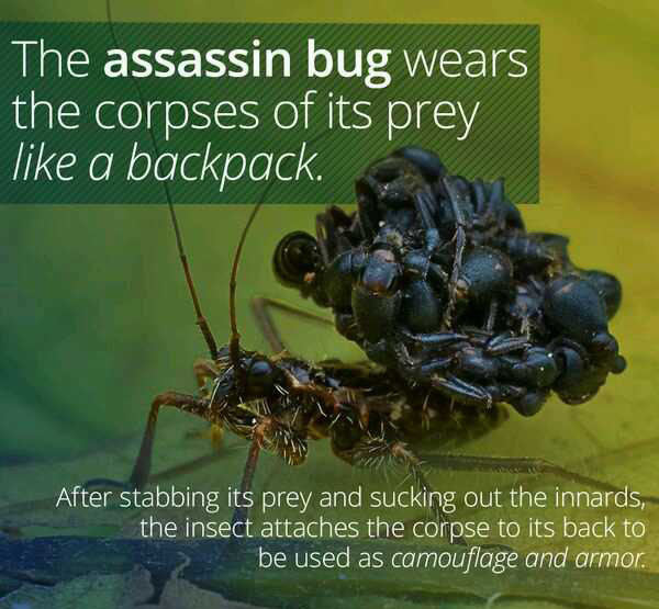 WTF Facts That Are Beyond Awesome (26 pics)