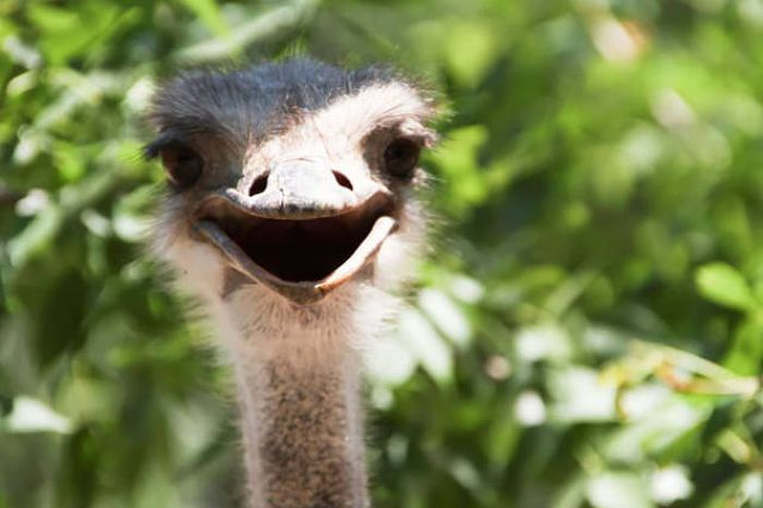 These Awesome Pictures Of Animals Smiling Are Beyond Adorable (50 pics)