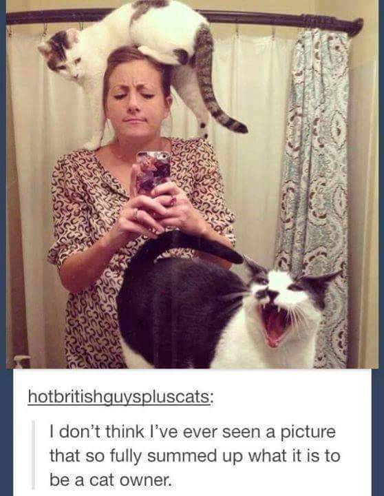 Cat Pictures That Will Never Not Be Funny (27 pics)