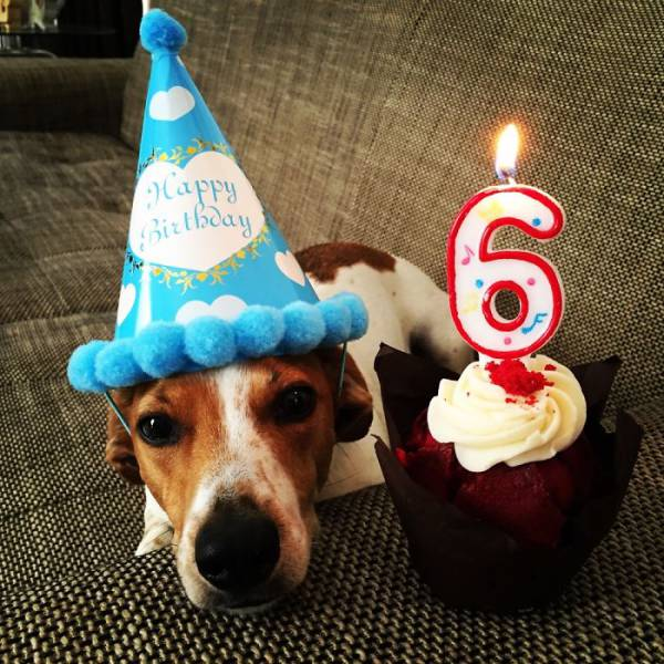 Sometimes Animals Have Cooler Birthday Parties Than Humans (47 pics)