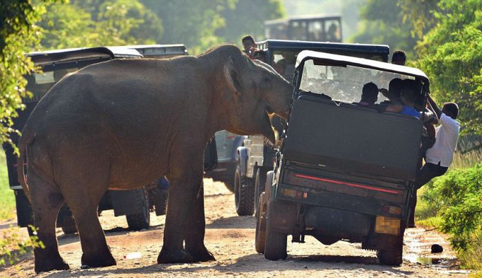 Tourists Cower In Fear As An Elephant Steals Their Food (8 pics)