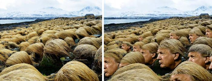 Scientists Have Now Discovered Where Donald Trump Grows His Hair (5 pics)