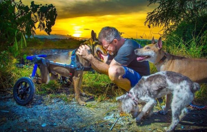 Every Single Day This Man Feeds 80 Stray Dogs In Thailand (13 pics)