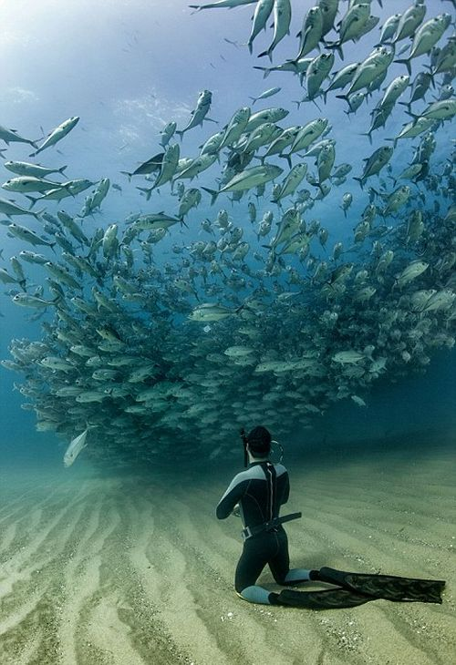 Underwater Photographer Captures An Incredible Marine Tornado (7 pics)