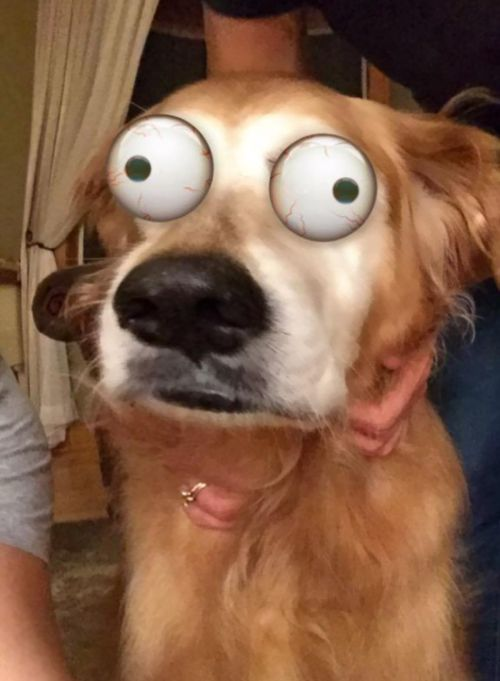 Snapchat Filters Are So Much Funnier When You Use Them On Animals (22 pics)