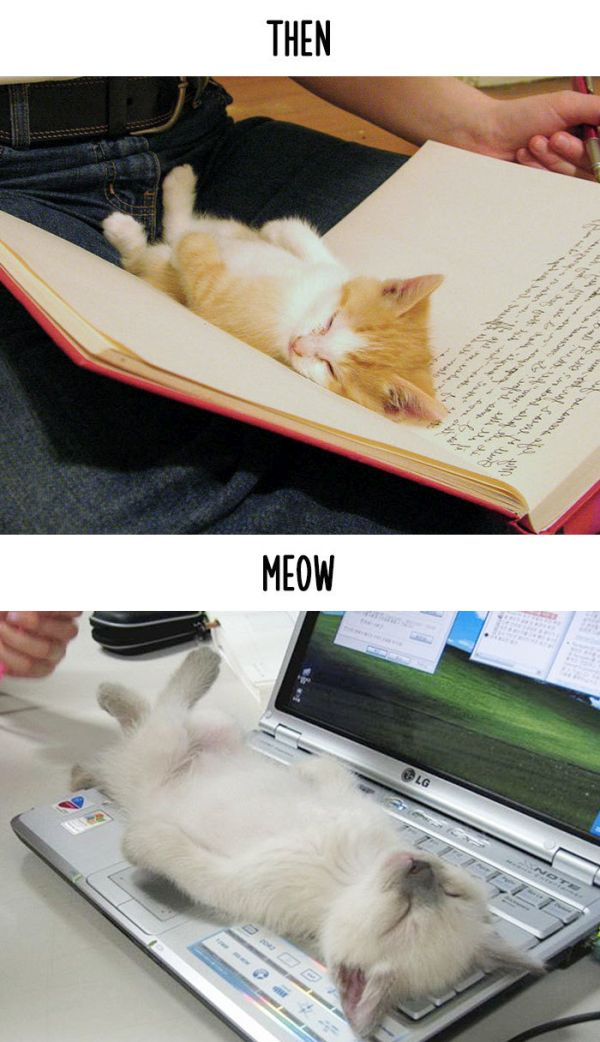 How Technology Has Impacted The Lives Of Cats (15 pics)
