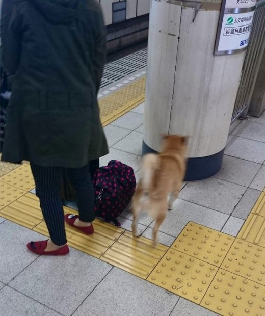 Dog Tries To Hitch A Free Ride On The Subway (4 pics)