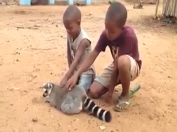 Children and Lemur
