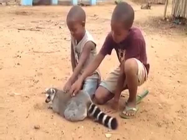 Children and Lemur