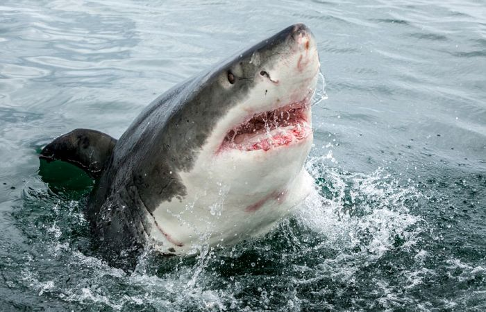 Shark Shocks Fishermen Off The Coast Of South Africa (4 pics)