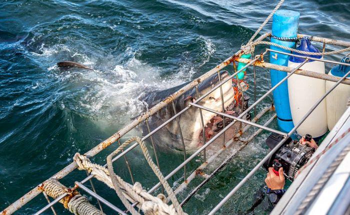 Shark Shocks Fishermen Off The Coast Of South Africa (4 pics)