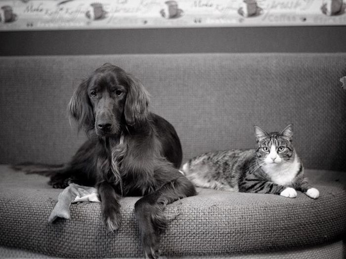 Cats And Dogs Can Be So Cute Together (14 pics)