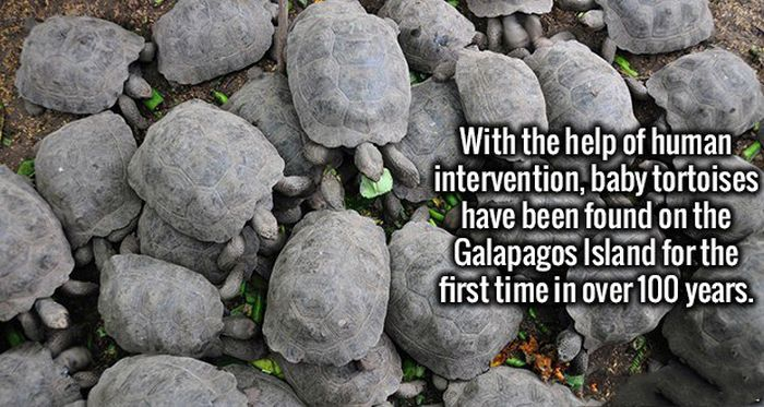 Fascinating Facts That Will Help You Start Fun Conversations (19 pics)
