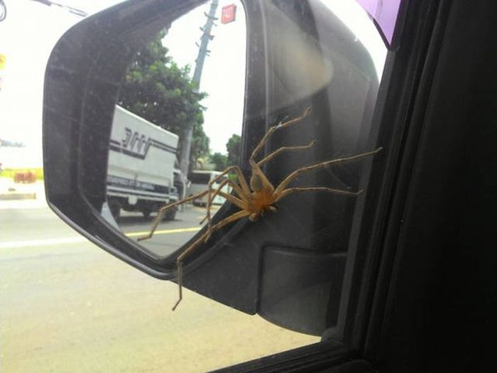 Here's A Full Serving Of Nope With An Additional Side Of Nope (42 pics)