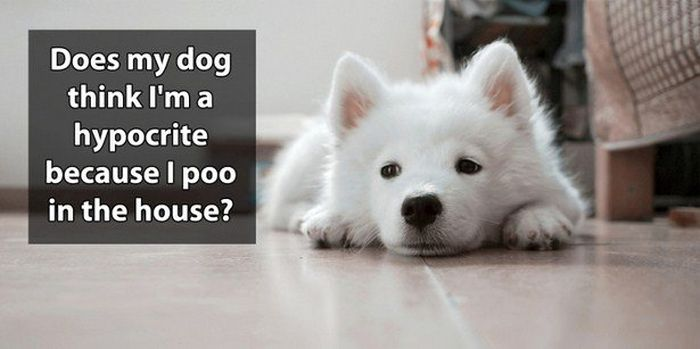 Shower Thoughts That Are Simply Brilliant (21 pics)