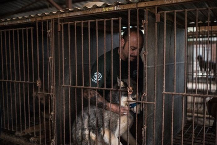 An International Organization Is Saving Dogs From Becoming Dog Meat (9 pics)