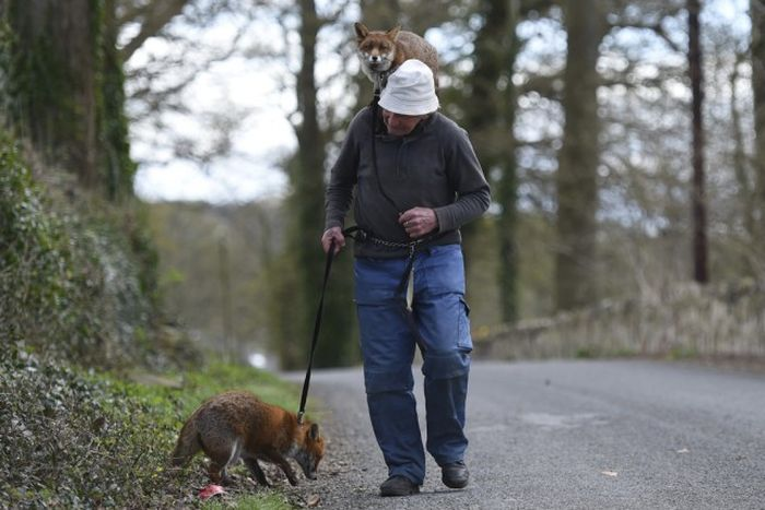 Man Takes In Two Foxes To Keep As Pets (10 pics)