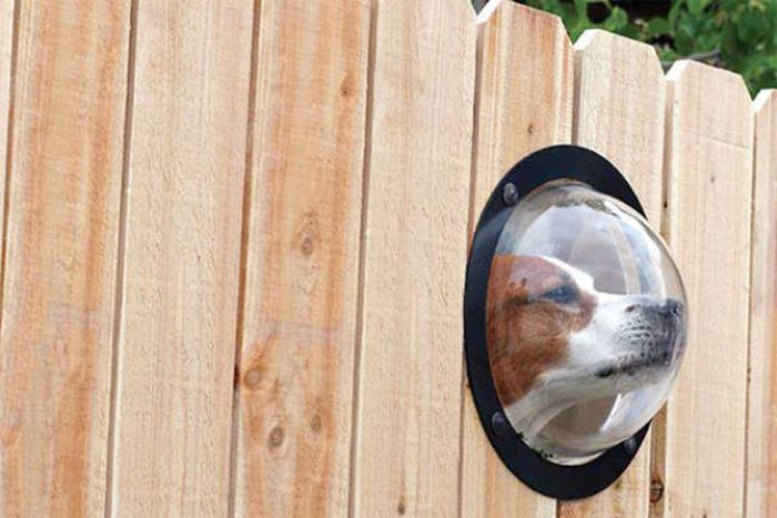 Fences Don't Get Much More Fun Than This (30 pics)