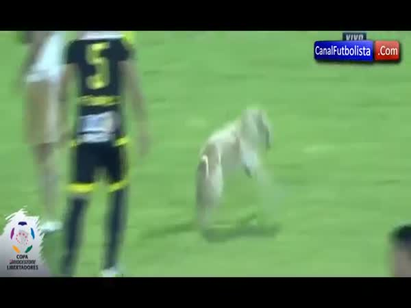 Dog Interrupts Soccer Match