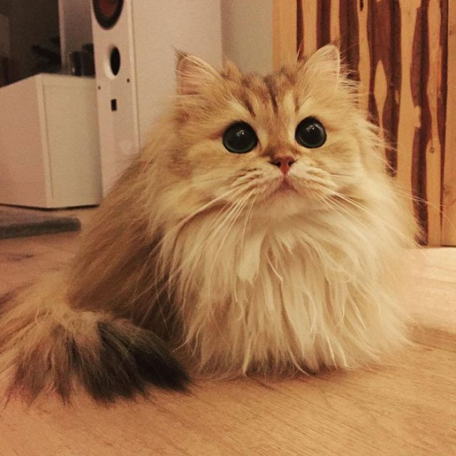 Smoothie Is Instagram's Most Photogenic Cat (10 pics)