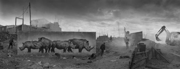 Animal Portraits Send A Strong Message To East Africa (21 pics)