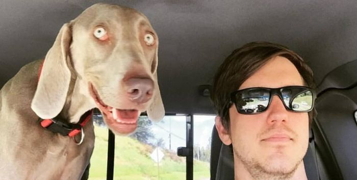 Dog Looks Very Different Before And After Mountain Biking (2 pics)
