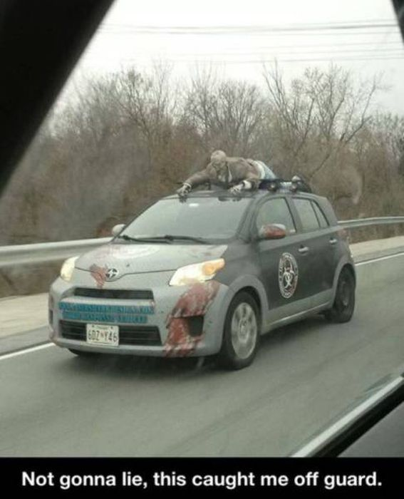 Hilarious Car Humor For The Commuter In All Of Us (54 pics)