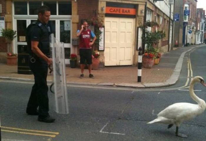 Photos That Prove Police Are Humans Just Like The Rest Of Us (45 pics)