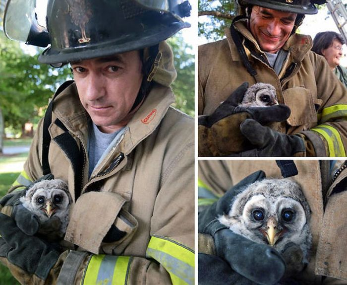 Australian Firefighters Risk Their Lives To Save Animals (30 pics)